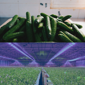 lighting for greenhouse and growers